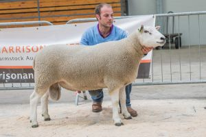 Lot 120 Second prize Shearling from G and A Fort sold  for 2000 gns.jpg