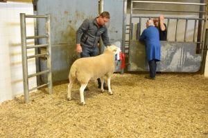 Roscommon 2019 - A McDonald sells champion ram at 850gns.JPG