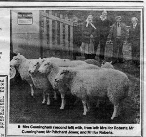 1984 - First Lleyn Sheep exported to Nortehrn Ireland.jpg