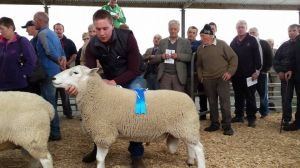 Roscommon 2015 - 2nd Prize Ram - Alan McDonald.jpg