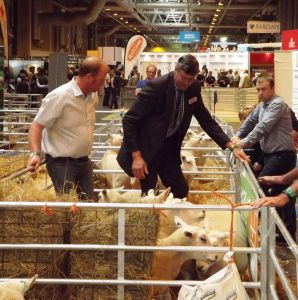 NLSC 2015 - Judge John Geldard sorts through the pens.jpg