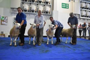 Web - Exeter 2018 - Line up of 1st prize rams.JPG