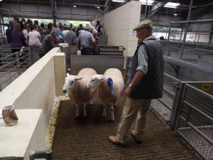 Exeter 2016 - Peter Honey waiting patiently with his two prize winning rams for Mrs Sayers.JPG
