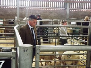 Stirling 2016 - Judge John Blakey judges the females in the pens.JPG