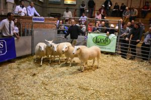 ROW 2018 - C & R Bowen sells 2nd prize pen of 5 shearling ewes at £162.JPG