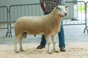Lot 95 from HM Dugdale and Son sold for 9,000 gns.jpg