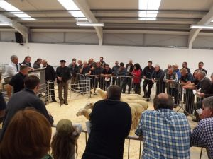 Ruthin 2016 - Selling Non MVA sheep in the exhibition hall.JPG