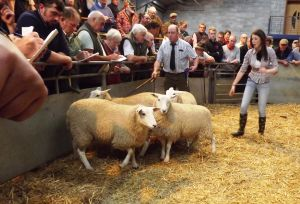 Carmarthen 2015 - Richard Twose sells send prize ewe lambs £125.jpg