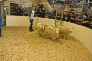 Roscommon 2019 - W Galvin sells shearling ewes at 180 euro.JPG