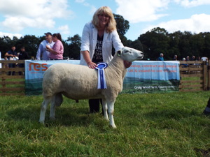 1st Prize Aged Ram and Reserve Champion.JPG