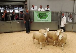 Stirling 2016 - JR Graham & Partners sells 1st prize ewe lambs £110.JPG
