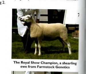 2009 - Final Royal Show Champion - Farmstock Genetics.JPG