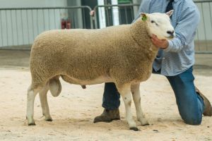 Lot 6 from GH Blakey sold for 7,500 gns.jpg