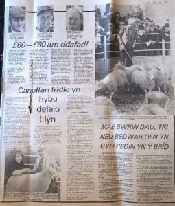First Lleyn Sheep Sale in Gaerwen (8).jpg