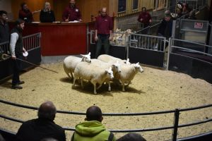 Skipton 2018 - T & I Walling sell 1st prize ewe lambs at £90.JPG