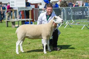 RHS 2018 - Overall Reserve Champion & Champion Female - T & I Walling.jpg
