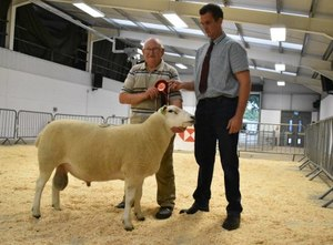 Ruthin 2018 - Champion Ram from Lionel Organ with judge Dylan Jones.JPG