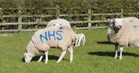 Lorna Wells Flock 575 - Supporting the NHS 060420.jpg