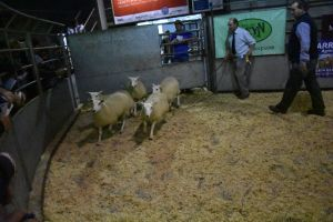 Brecon 2018 - Twose Farms sells 3rd prize ewe lambs at £100.JPG