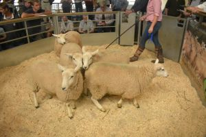 Exeter 2019 - A Parker sells ewe lambs for £80.JPG