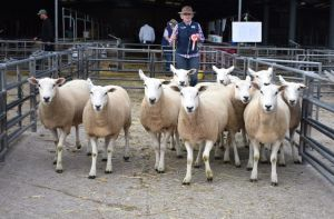 ROW 2018 - 1st Prize Pen of 10 Shearling Ewes from GG & HE Sevenoaks - £160.JPG