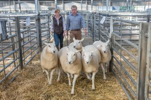 Pen of Gimmers from JF Robinson sold for £250 per head.jpg