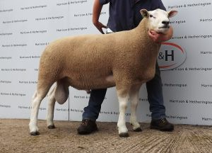 Carlisle 2014 - Top Priced Ram from Hamish Goldie lot 44 8000gns.jpg