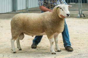 Lot 7 from GH Blakey sold for 6,700 gns.jpg