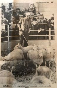 First Lleyn Sheep Sale in Gaerwen (5).jpg