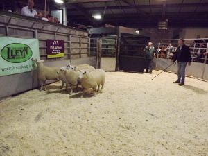 Brecon 2017 - M & S Etherton sell ewe lambs to £85.JPG