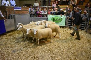 ROW 2018 - C & R Bowen sells 3rd prize pen of 10 ewe shearling ewes for £158.JPG