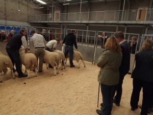 Stirling 2017 - Judging the rams.JPG