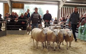 Welshpool 2015 - 1st Prize Shearling Ewes sell for £275 - WJ & DJ Williams.jpg