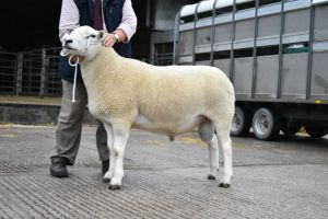 Ruthin 2018 - Champion Ram from L Organ - 1100gns.JPG