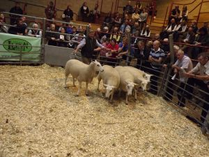 Ross 2017 - AG Selway sells 3rd prize shlg ewes at £172.JPG