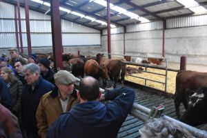 AGM 2018 - Glenarm - looking at the cattle.JPG