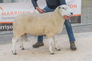 Lot 134 from L Organ sold for 2000 gns.jpg