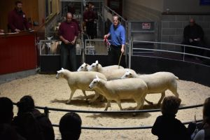 Skipton 2018 - H Goldie sells 1st prize shearling ewes - £165.JPG