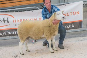 Lot 39 from H M Dugdale and Son sold for 3000 gns.jpg