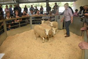 Exeter 2019 - S Redwood sells shearlings to £158.JPG