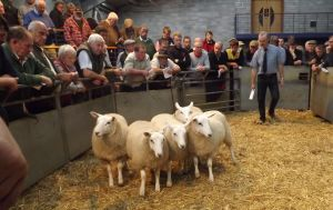 Carmarthen 2015 - JE George sells ewe lambs £110.jpg