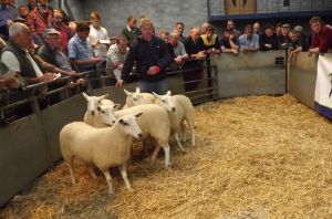 Carmarthen 2015 - Dylan Vaughan sells shearlings at £170.jpg