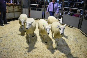 Ruthin 2018 - IO & A Jones sells 2nd prize shearling ewes for £150.JPG