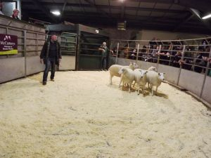 Brecon 2017 - E & L Thomas sells 3rd prize shearling ewes - £160.JPG