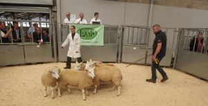 Stirling 2016 - John Morton sells 3rd prize ewe lambs £100.JPG