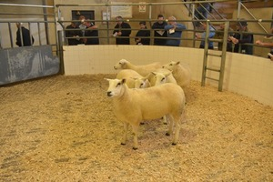 Roscommon 2019 - 2nd prize shearling ewes from L & S McCrossan sell at 200 euro.JPG