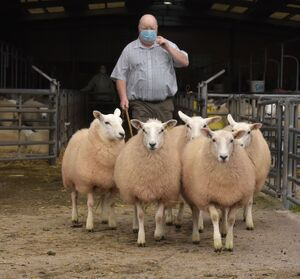 ROW 2020 - Top Priced ewe lambs - C & J Price £135.JPG