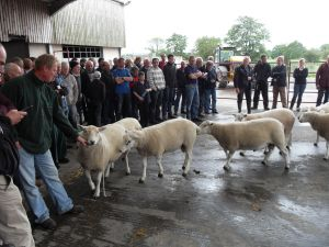 Ballymena 2015 - The crowds gathered to see the shearling rams judged.jpg