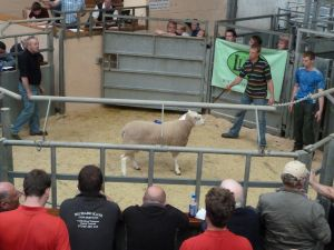 Ballymena 2014 - Barry Latimer sells 2nd prize ram for top price of 880gns.jpg