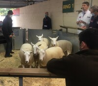EXETER - E & D Jones sells top priced shearling ewes £215.jpeg